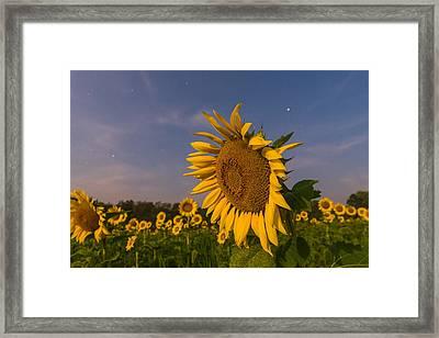 Night Field Framed Print