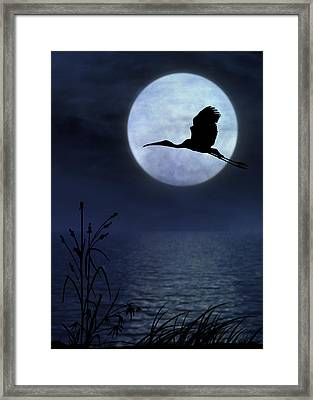 Night Flight Framed Print by Christina Lihani