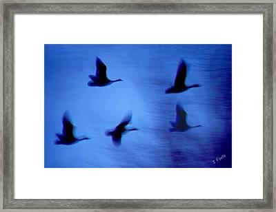 Night Flight Framed Print