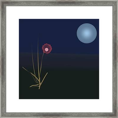 Night Flower Framed Print by Denny Casto
