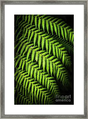 Night Forest Frond Framed Print