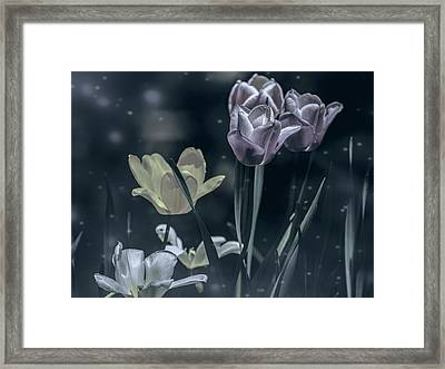 Night Garden Tulips  Framed Print