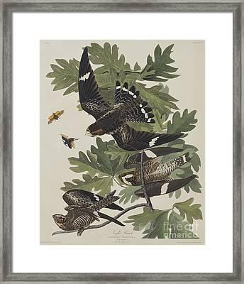 Night Hawk Framed Print