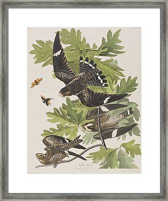 Night Hawk Framed Print by John James Audubon