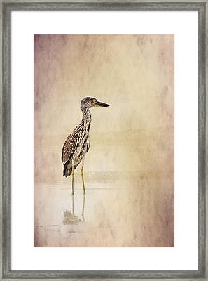 Night Heron 3 By Darrell Hutto Framed Print by J Darrell Hutto