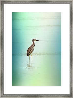 Night Heron By Darrell Hutto Framed Print by J Darrell Hutto