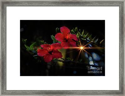 Night Hibiscus Framed Print by Al Bourassa