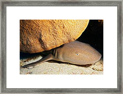 Nocturnal Hunter Framed Print by Aaron Whittemore