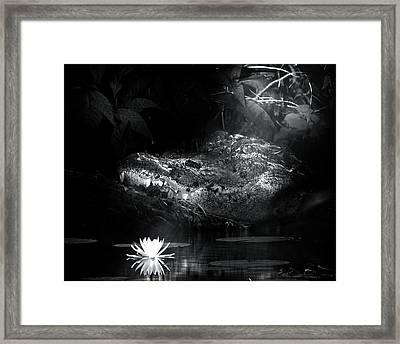Night Hunter Framed Print by Mark Andrew Thomas
