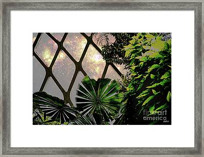 Night In The Arboretum Framed Print