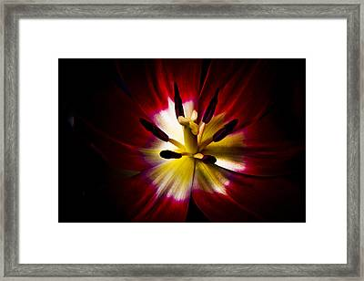 Night Lily Two Framed Print by John Ater