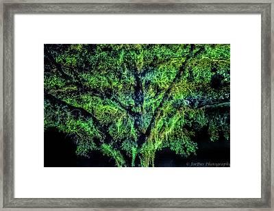Night Moss Framed Print