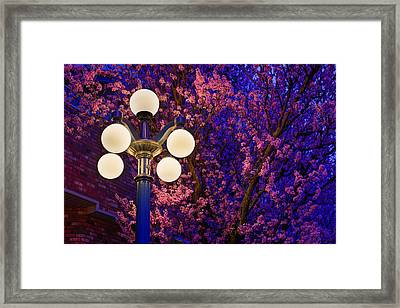Night Of The Cherry Blossoms Framed Print