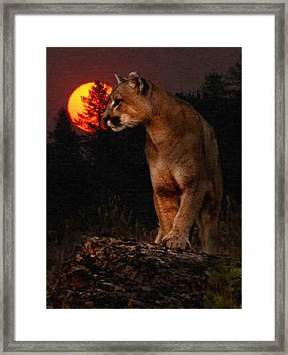 Night Of The Cougar Framed Print