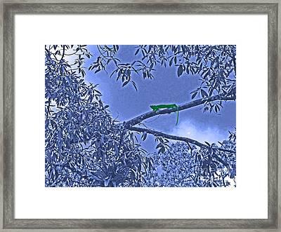 Night Of The Iguana Framed Print by Al Bourassa
