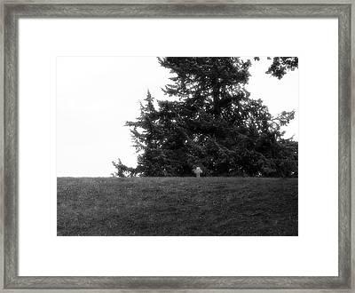 Night Of The Living Framed Print