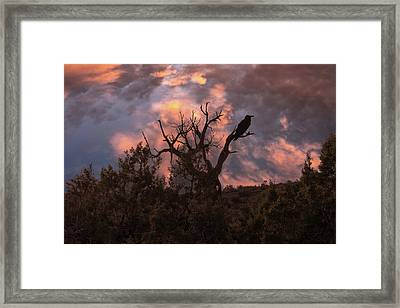 Night Of The Raven Framed Print