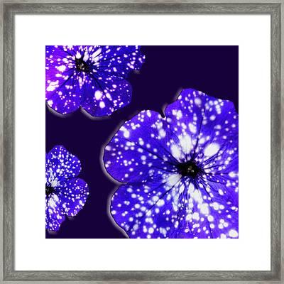 Night Sky Petunias Framed Print by Tara Hutton