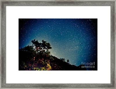 Night Sky Scene With Pine And Stars Framed Print by Raimond Klavins