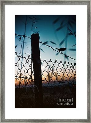 Night Sparrow Framed Print