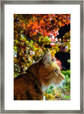Night Stalker Framed Print