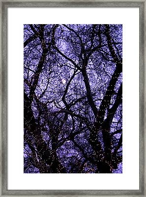 Night Tree Framed Print by Jez C Self