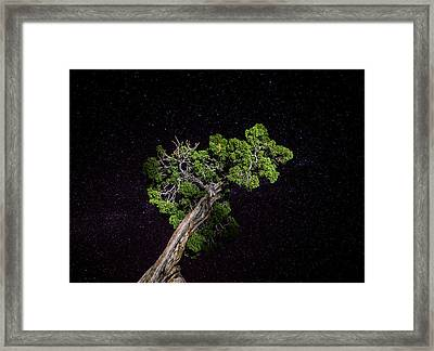 Framed Print featuring the photograph Night Tree by T Brian Jones