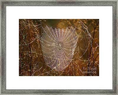 Night Weaver Framed Print