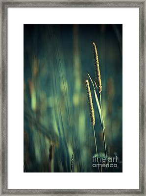 Night Whispers Framed Print by Aimelle