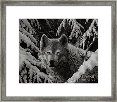 Night Wolf Framed Print