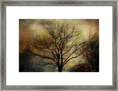 Nightfall Framed Print by Barbara Chichester