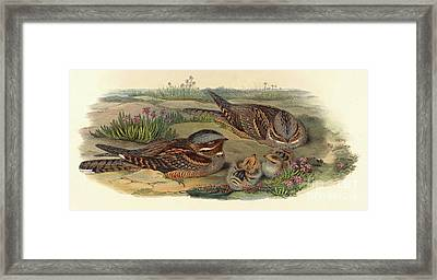 Nightjar Framed Print by John Gould