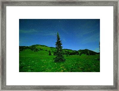 Nightly Stars And A Small Hemlock  Framed Print