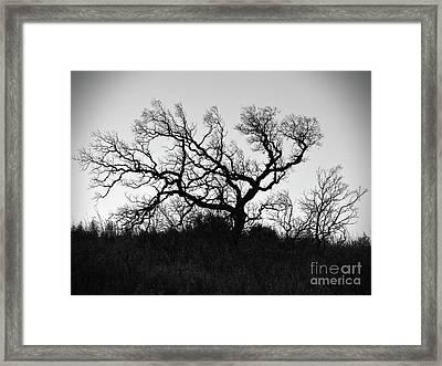 Nightmare Tree Framed Print