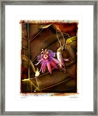 Framed Print featuring the photograph Nightshade by Linda Olsen