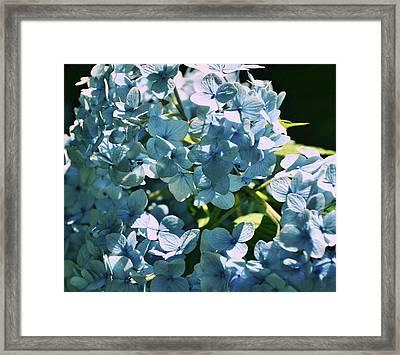 Nikko Blues Framed Print by JAMART Photography
