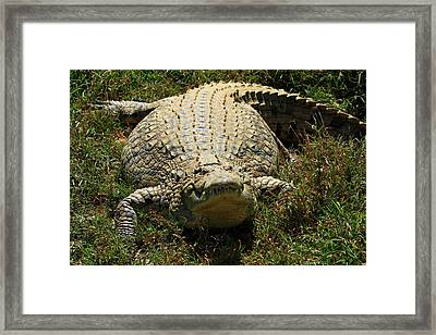 Nile Crocodile - Africa Framed Print by Aidan Moran