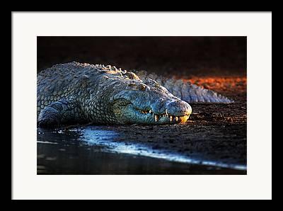 Croc Framed Prints