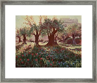 Nimrods Castle, Northern Galilee, Israel Framed Print