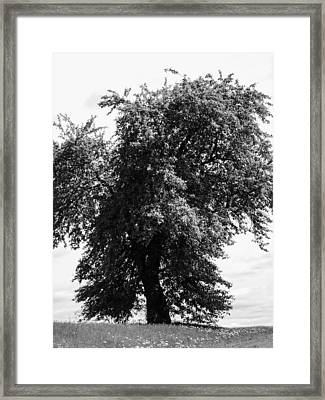 Nina Tree Dressed Out Bw Framed Print