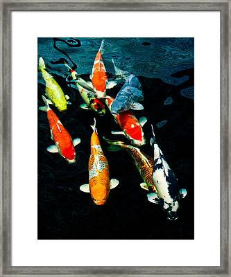 Nine Koi Framed Print