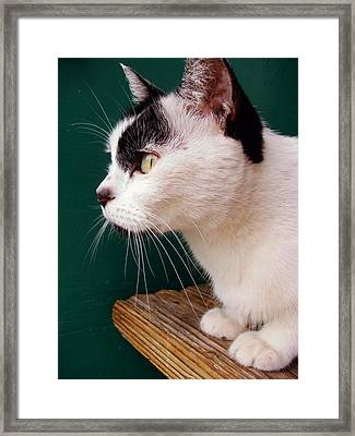 Nine Lives Framed Print by JAMART Photography