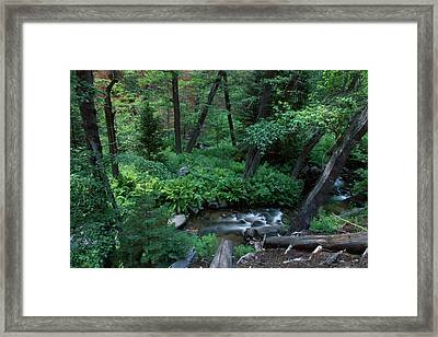 Nine Mile Creek - Golden Trout Wilderness Framed Print by Soli Deo Gloria Wilderness And Wildlife Photography