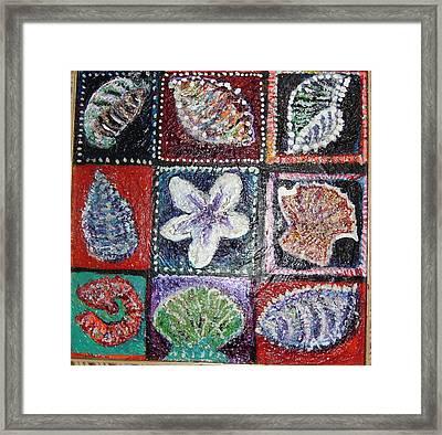 Nine Pretty Shells No Frame Framed Print by Anne-Elizabeth Whiteway