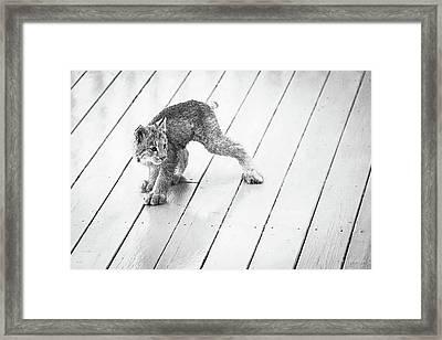 Ninja Lynx Kitty Bw Framed Print