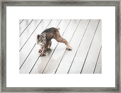 Ninja Lynx Kitty Framed Print