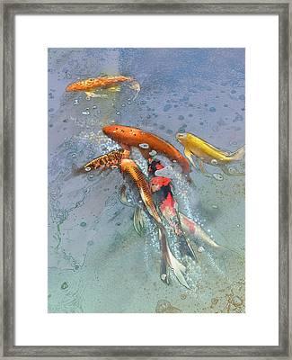 Nishikigoi Framed Print