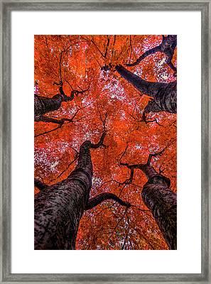 Nishinomiya Japanese Garden - Autumn Trees Framed Print by Mark Kiver