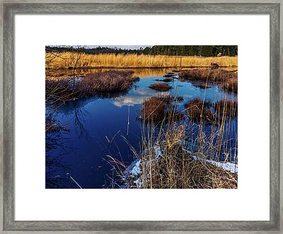 Nj Pinelands Savanna Art Framed Print by Louis Dallara