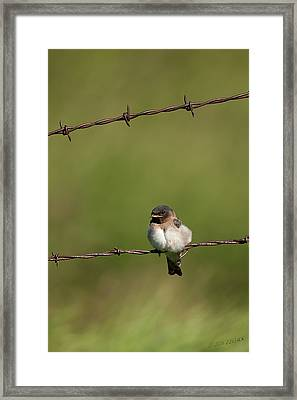No Boundries Framed Print